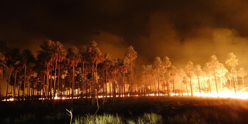 pantanal, queimadas, fogo