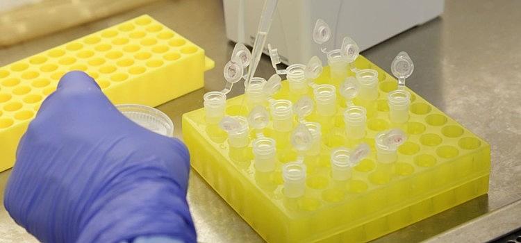 Vacina, teste, laboratório