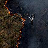 Amazônia teve novo recorde de destruição em outubro