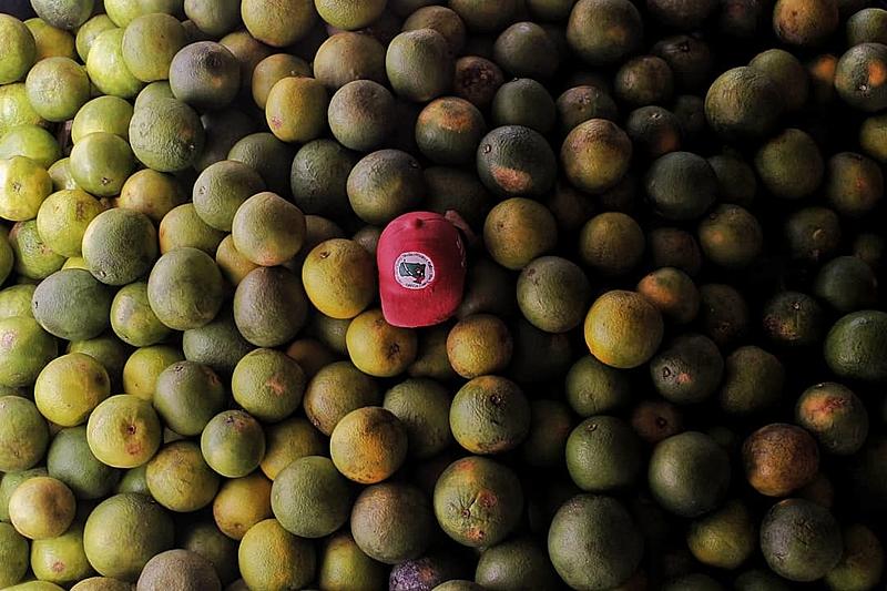 Os alimentos são produzidos no assentamento Osvaldo de Oliveira e no acampamento Edson Nogueira, organizados pelo MST em localidades próximas à Macaé